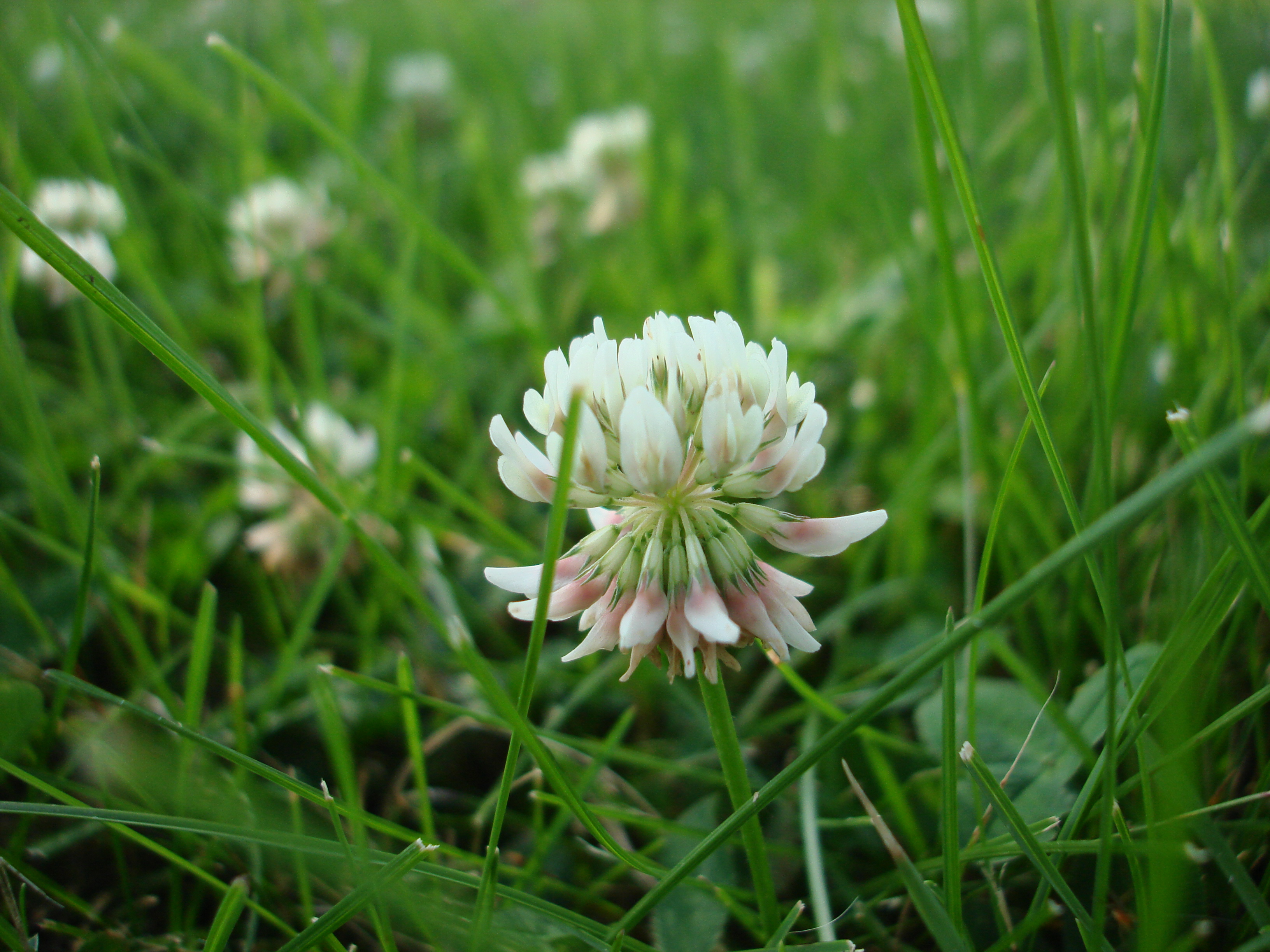 top image credit - Types Of Weeds