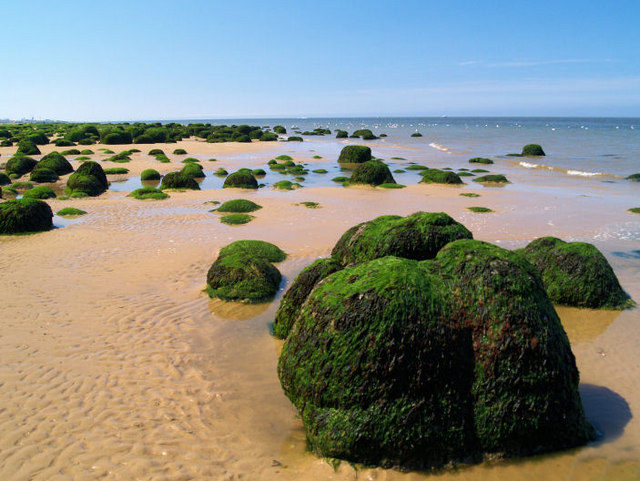 Unusual seaweed covered tufts on beach at Hunstanton. - geograph.org.uk - 492286