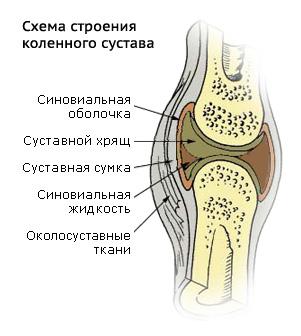 Суставы жрг вирус суставов
