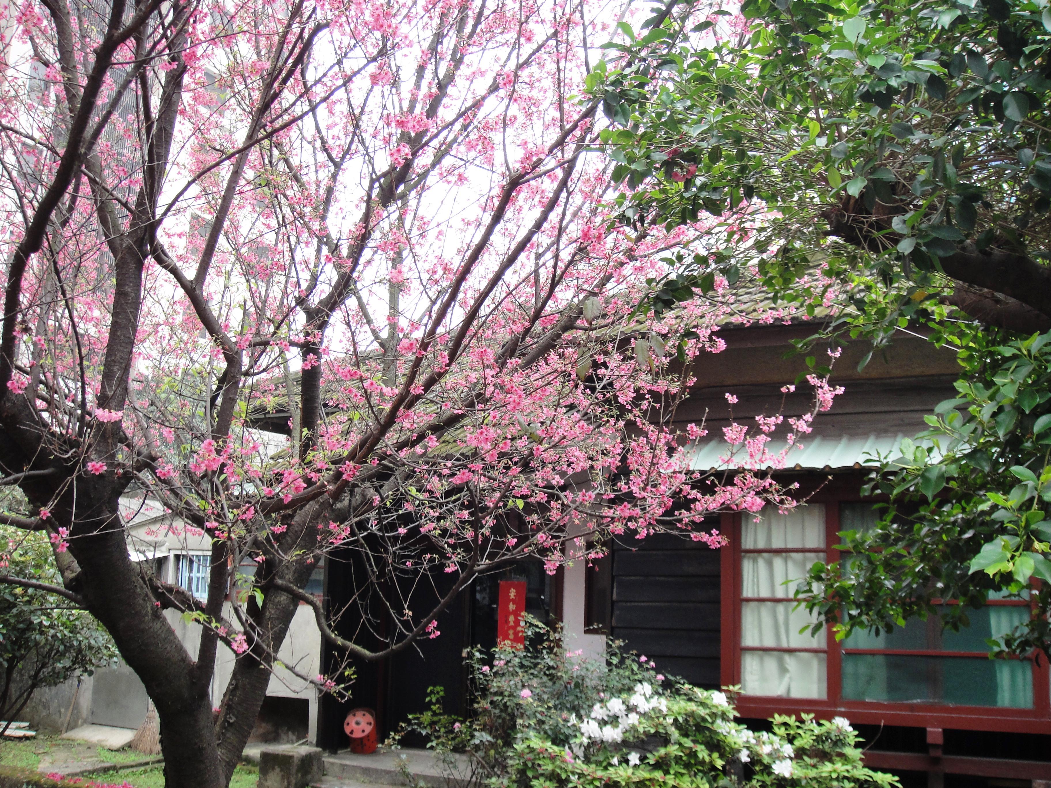 Cherry Blossom Tree Cake Topper
