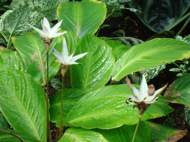 calathea plant care instructions