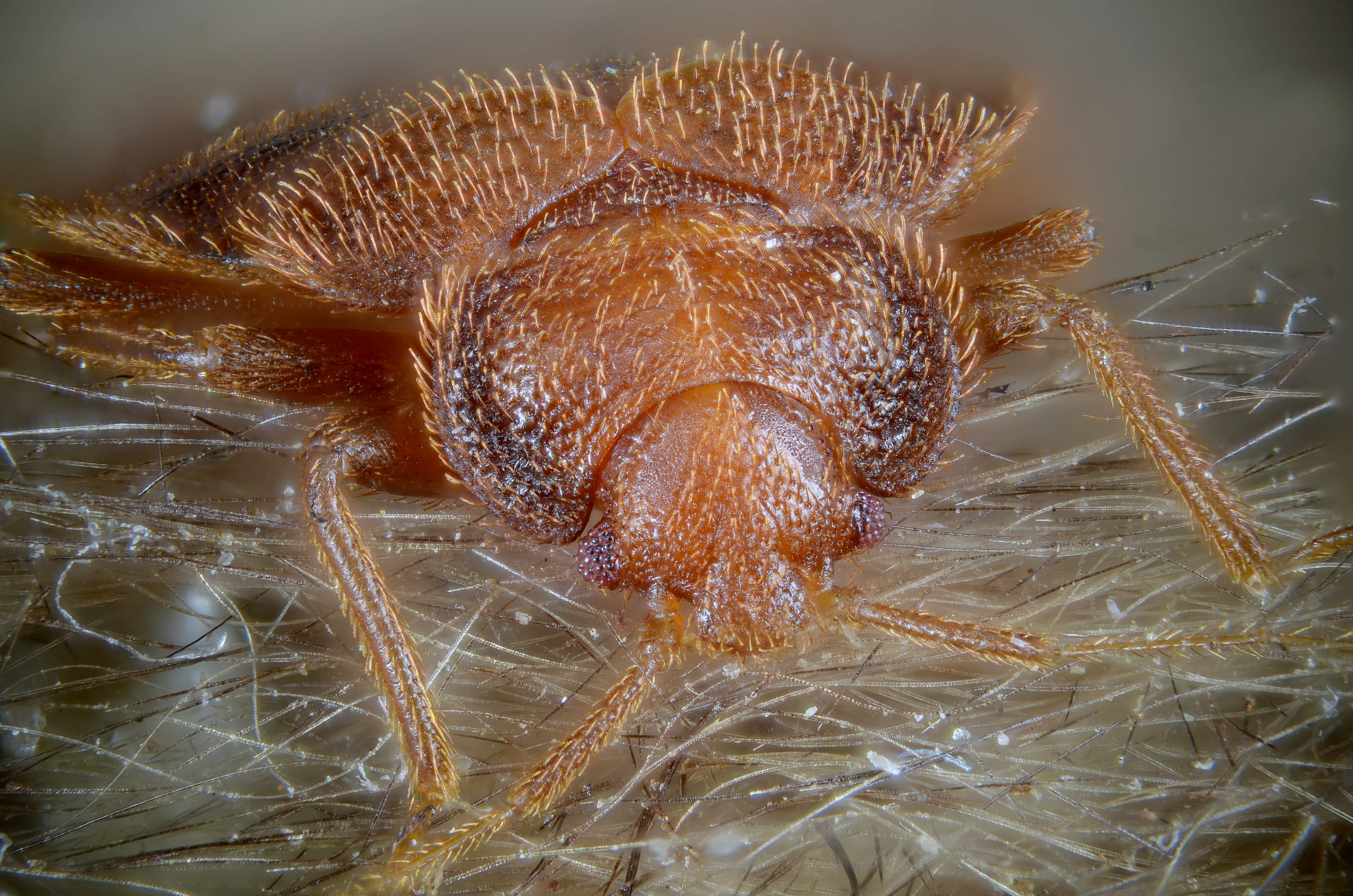Can Bed Bugs Detect Infread Light