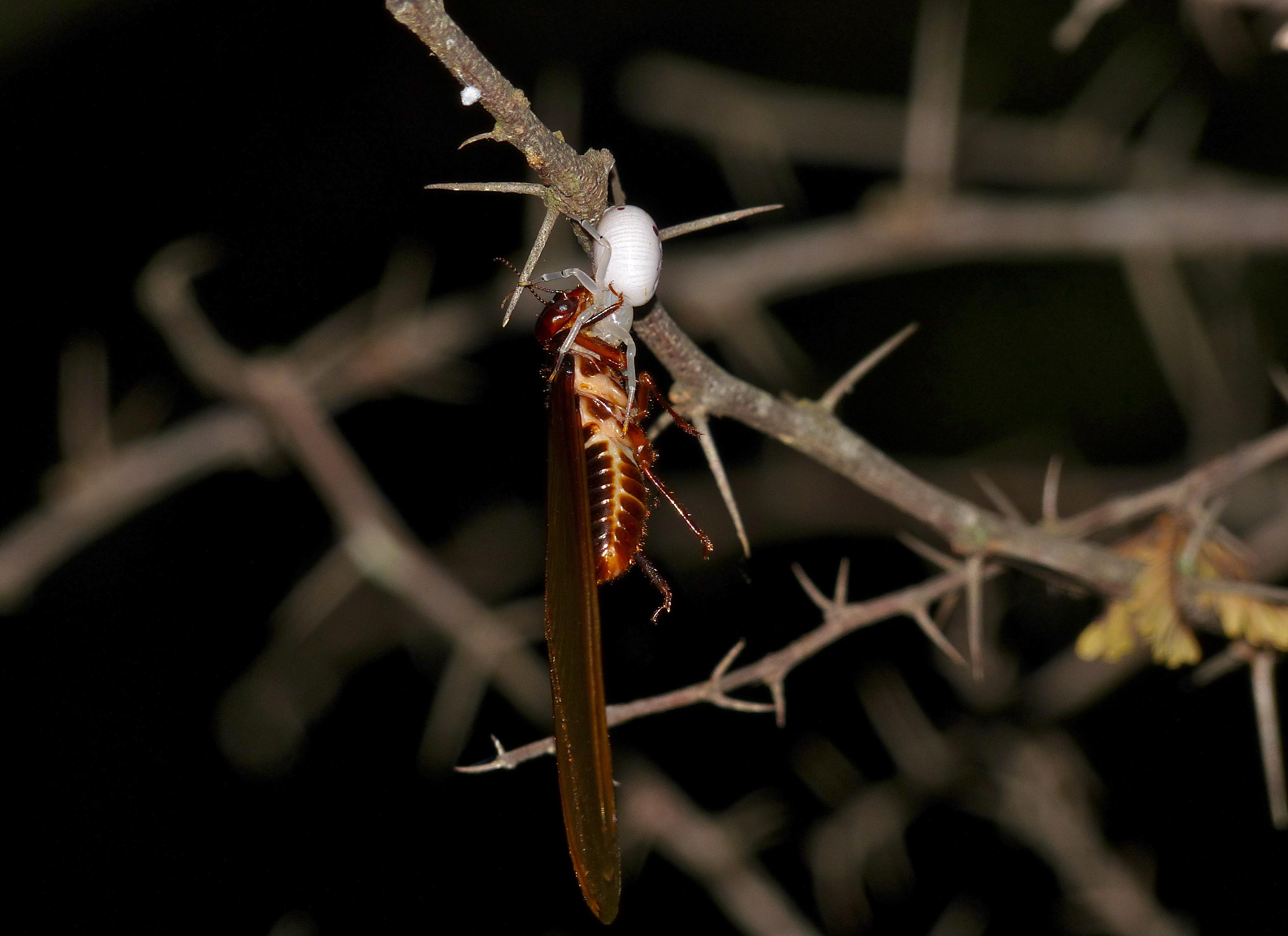 Wiki: Termite - upcScavenger