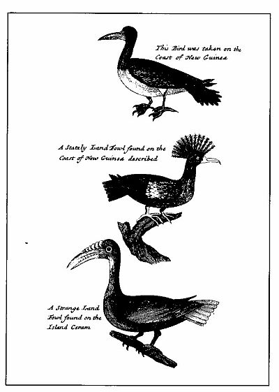 BIRDS OF NEW GUINEA.