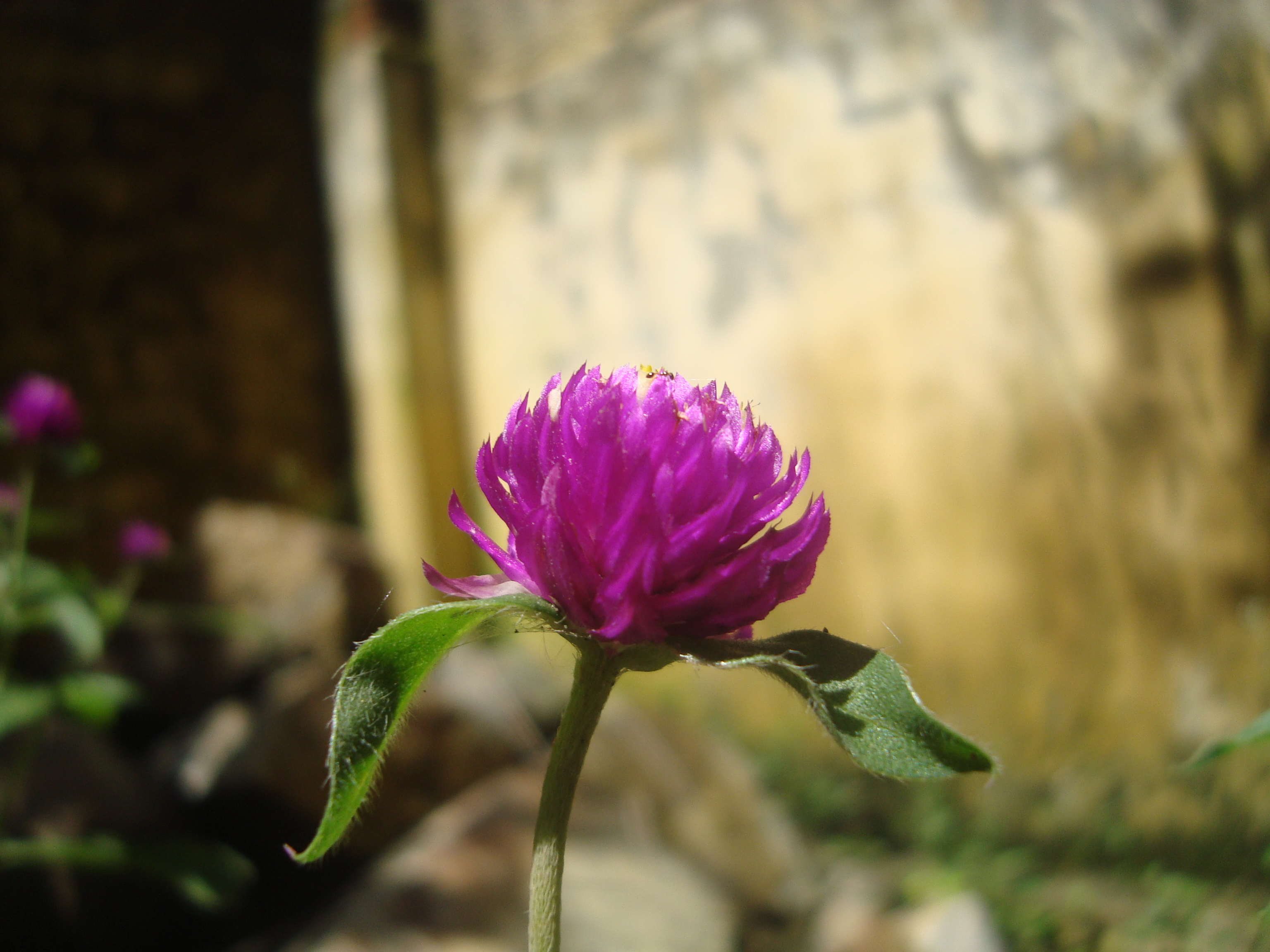 Fileflowers Are Really Beautifulg Wikimedia Commons
