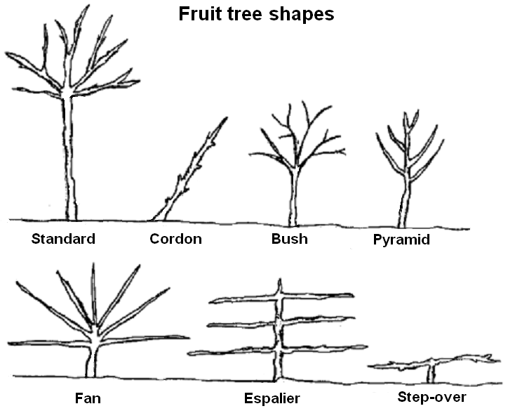 Fruittreeforms.png