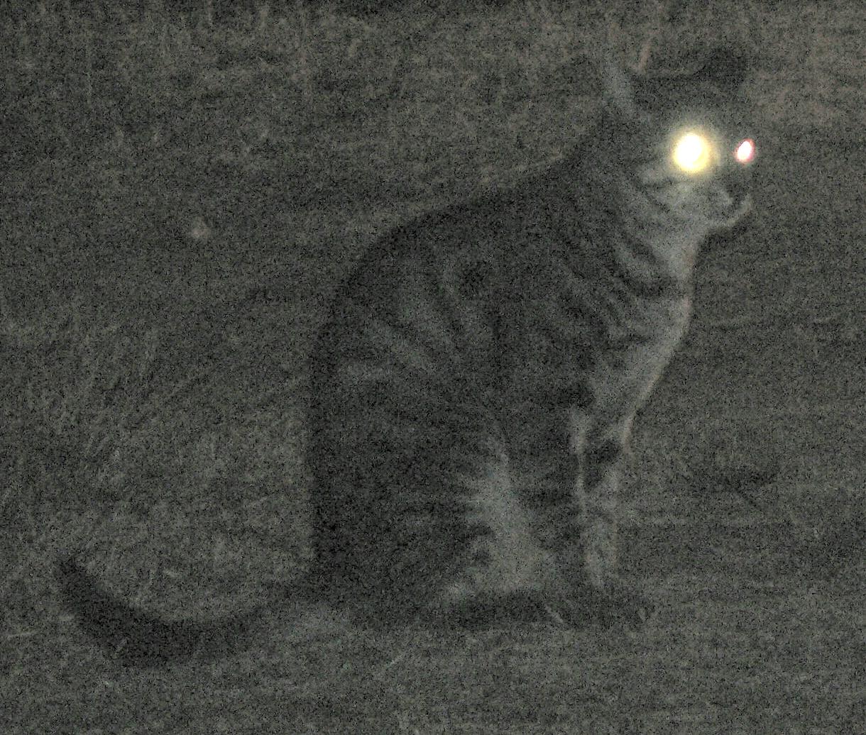 Kattenretinatapijtweerkaatsing.jpg