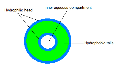 Liposome Structure.png