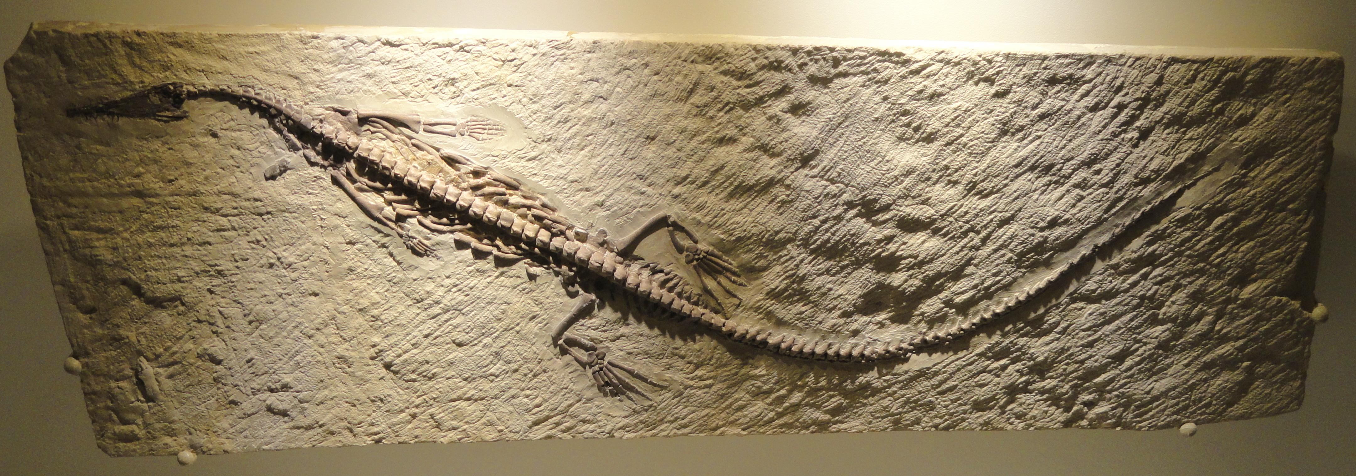 Houston Natural History