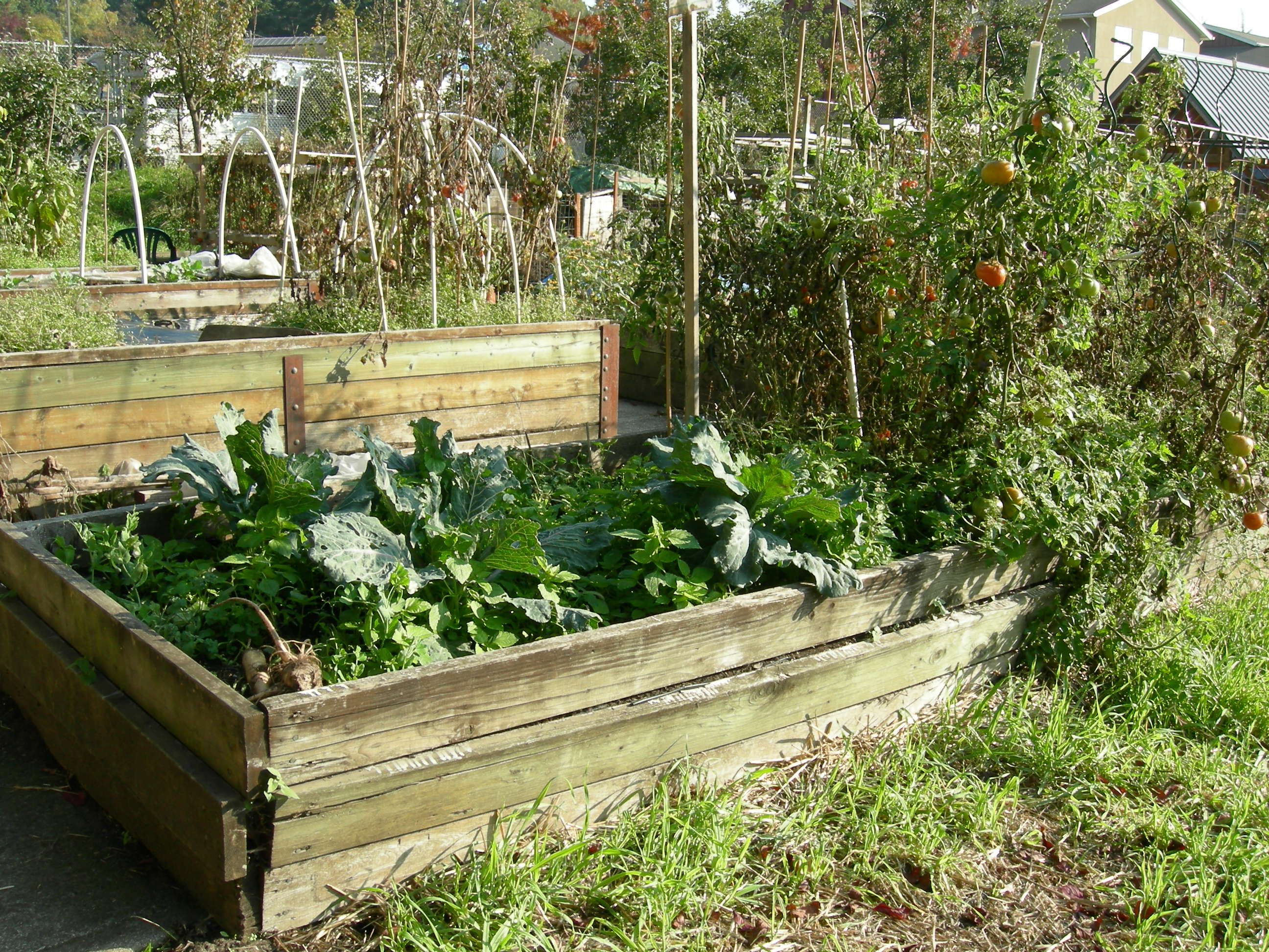 Cheap Raised Bed Ideas