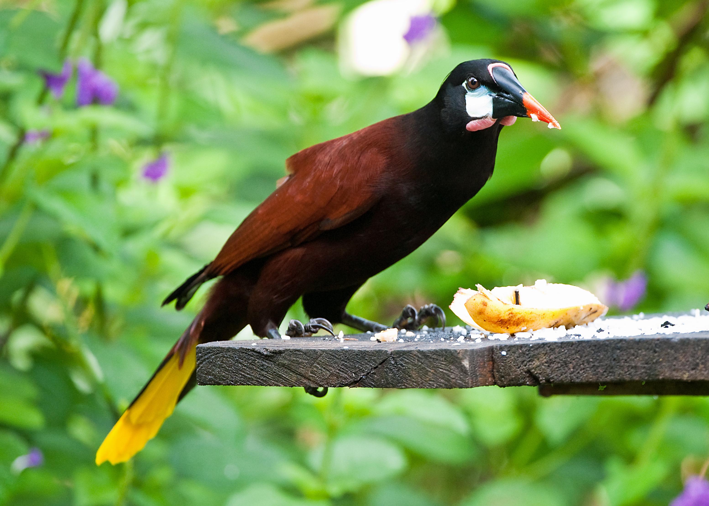 Birds Nest Cafe Bedford Menu