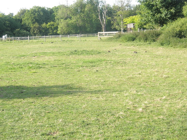 File:Rabbits in the field just off Wade Lane - geograph.org.uk - 1321160.jpg