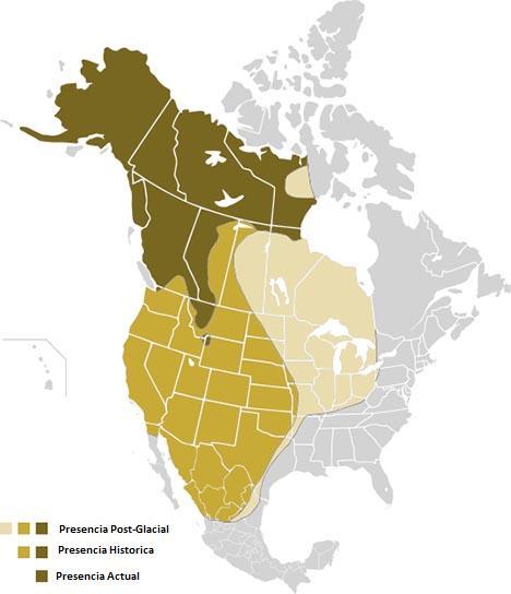 Extensión territorial del oso grizzly