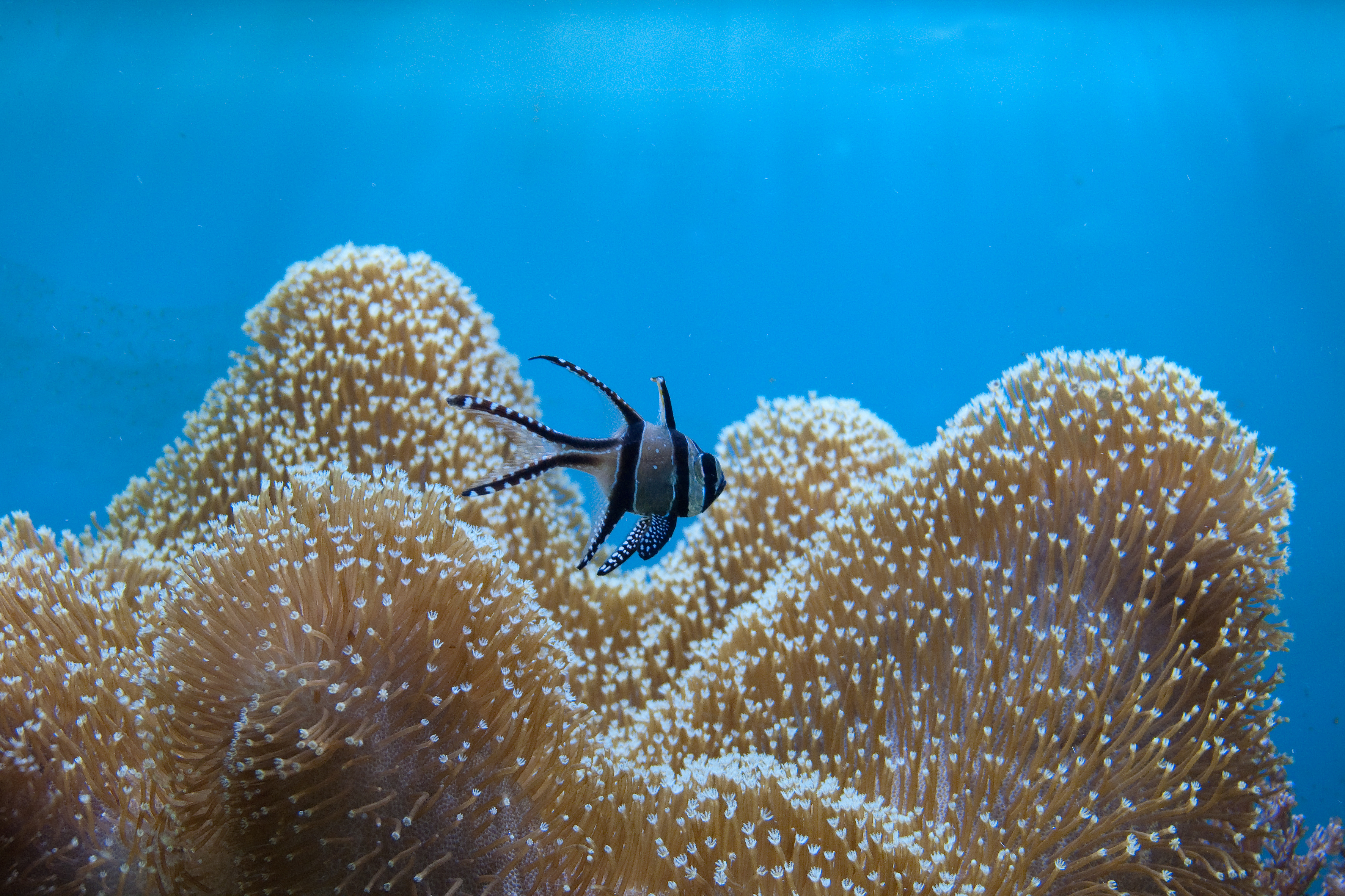 life of a fish in sea Commentary and archival information about fish and other marine life from the  new york times  warmer oceans can bleach sea anemones, not just coral.