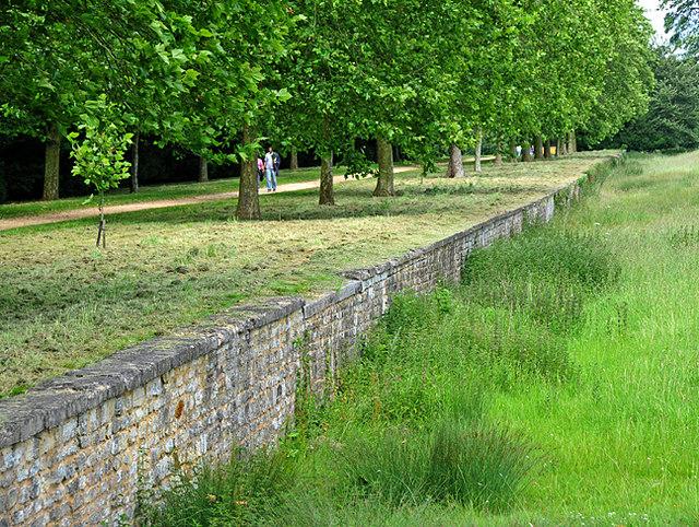 murek trawnik aleja drzew