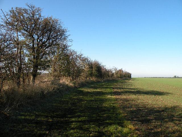 Trees along Harcamlow Way - geograph.org.uk - 1026420