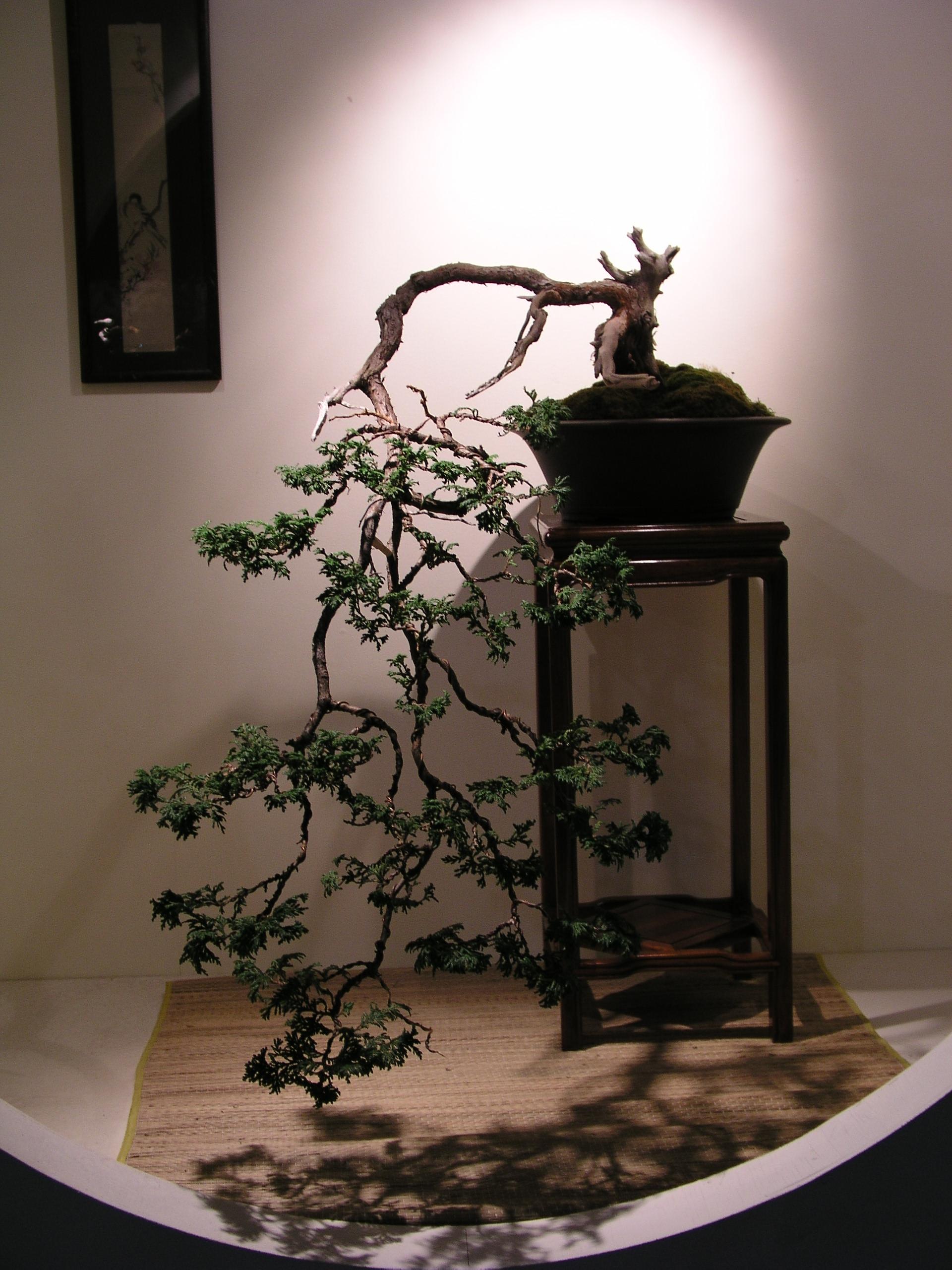 File Weeping Bonsai Jpg Wikimedia Commons