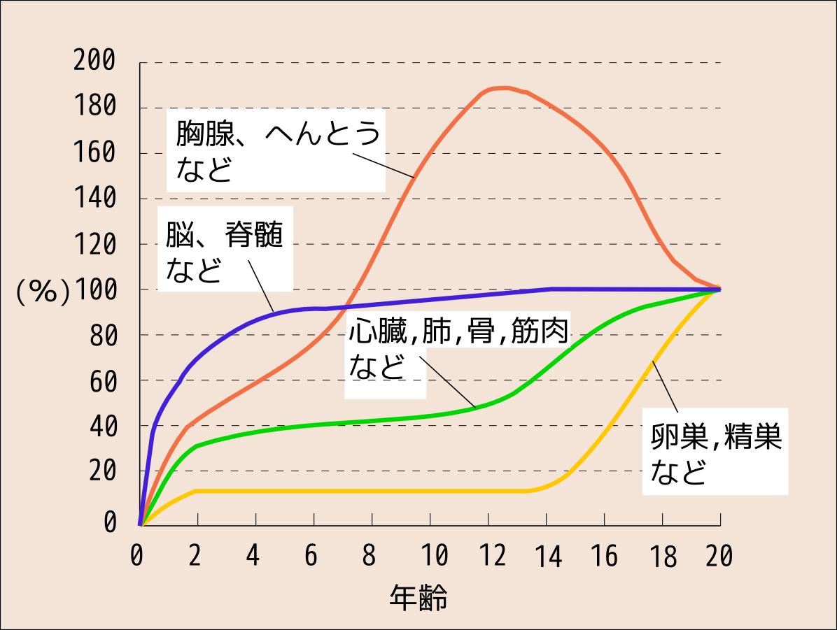 「スキャモン 発達曲線」の画像検索結果
