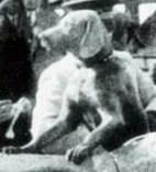 1930 Yalova visit.jpg