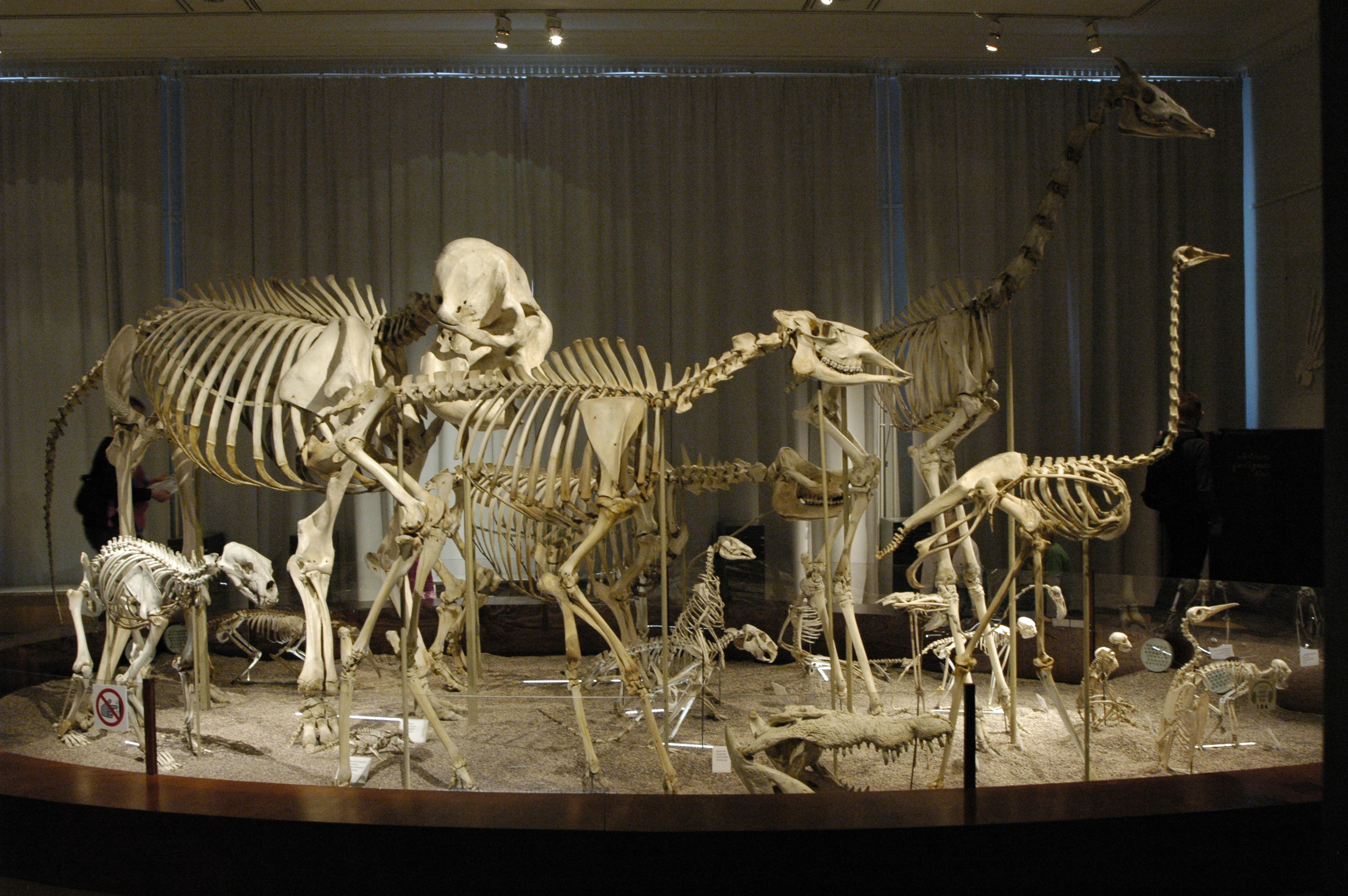 Natural Museum Of History Museum Of Osteology
