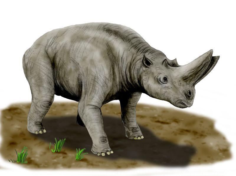 بحث علمى عن الحيوانات المنقرضة بالصور ، بحث بالصور عن الحيوانات المنقرضة 2017 Arsinoitherium_BW.jpg
