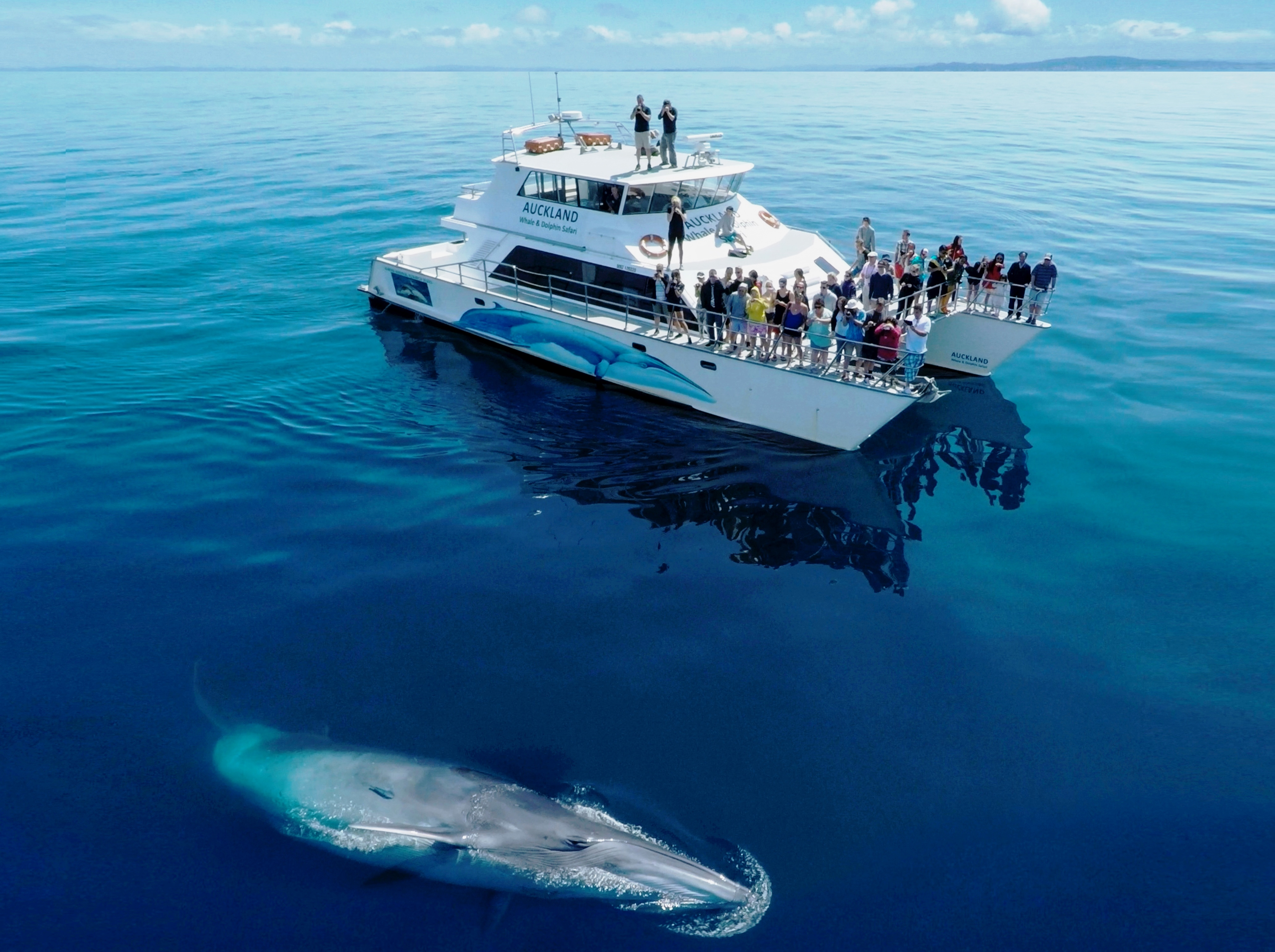Organizers File Bryde S Whale Hauraki Gulf Marine Park New Zealand