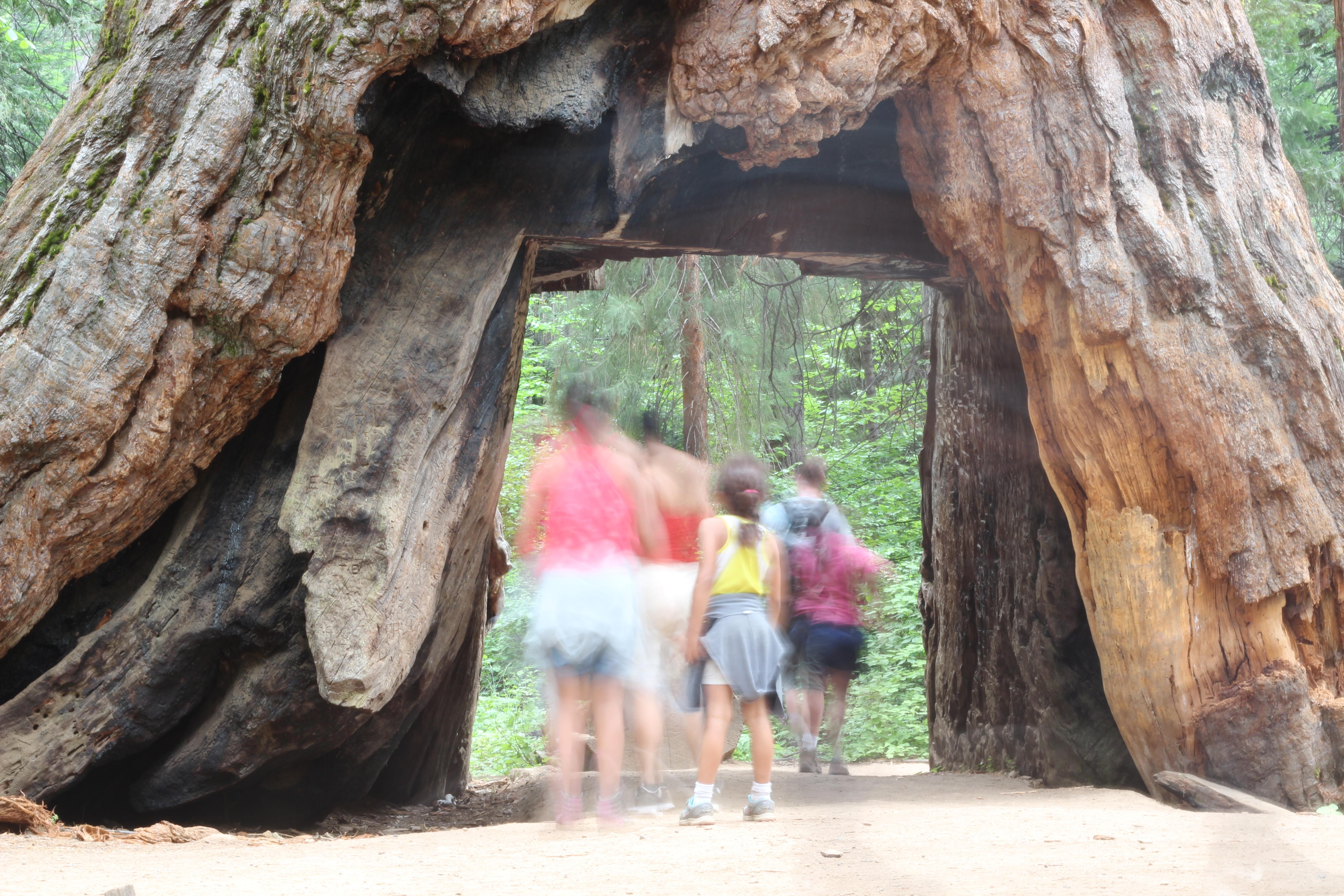 Calaveras Big Trees State Park Erlend Haddeland.JPG