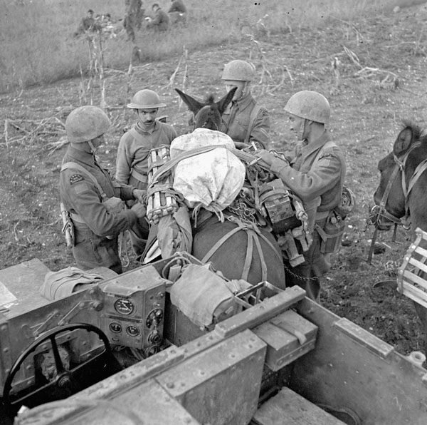 File:Canadian soldiers with UC and mule, October 1943.jpg