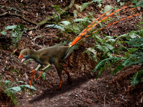 Epidexipteryx NT