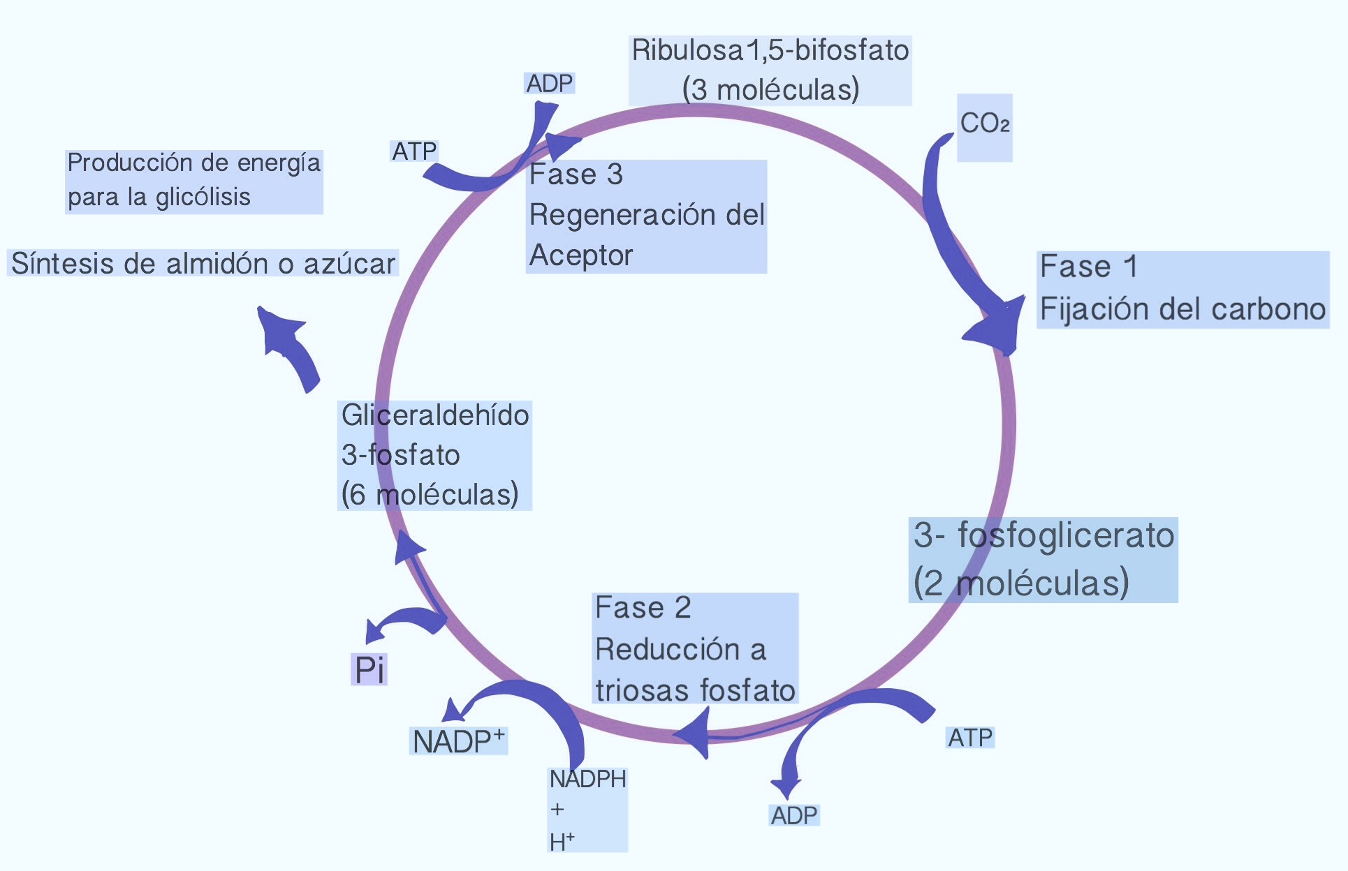 Oxido reduccion en la fotosintesis 20