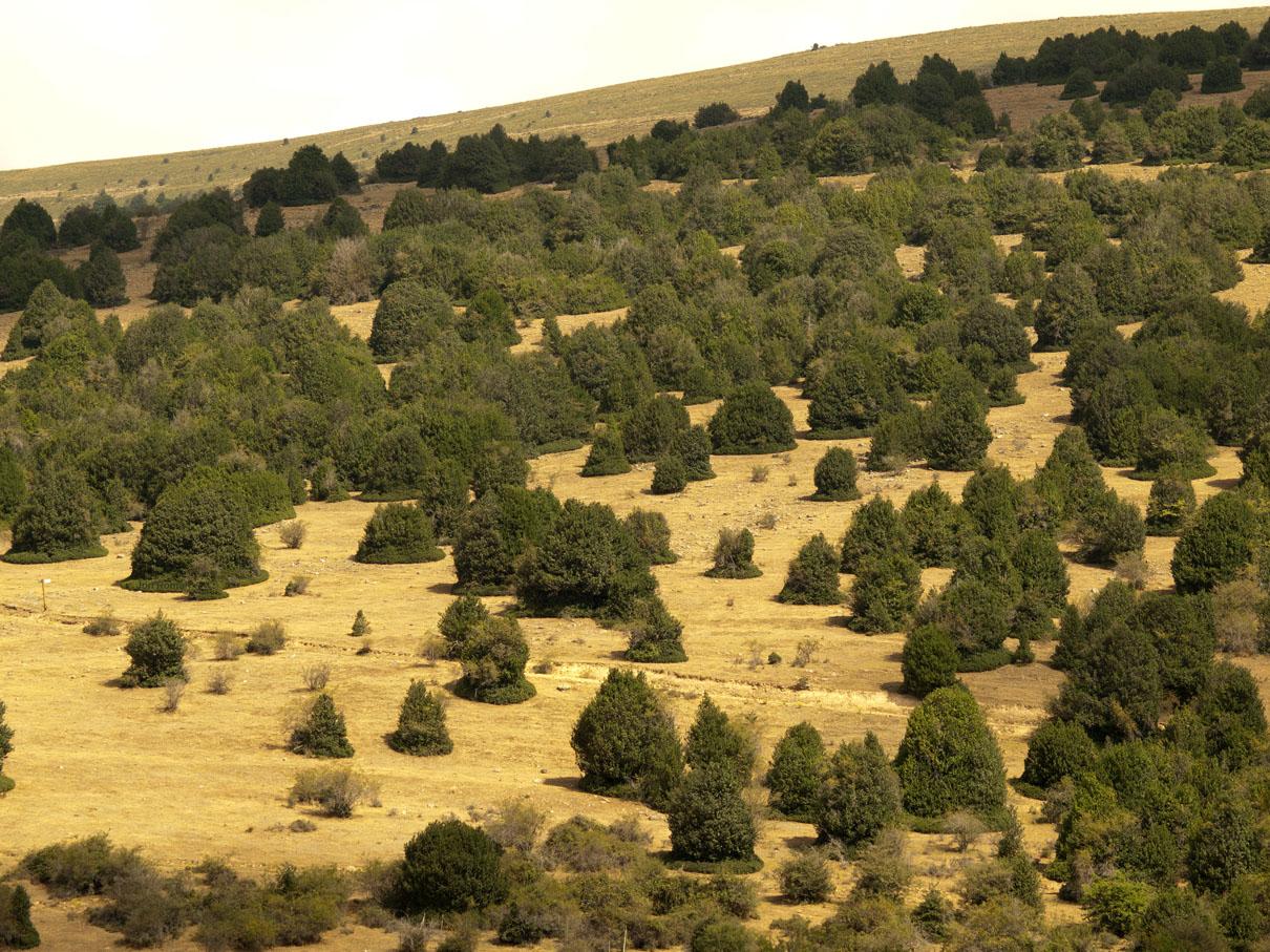Arévalo de la Sierra