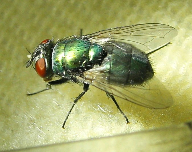 how to stop green fly