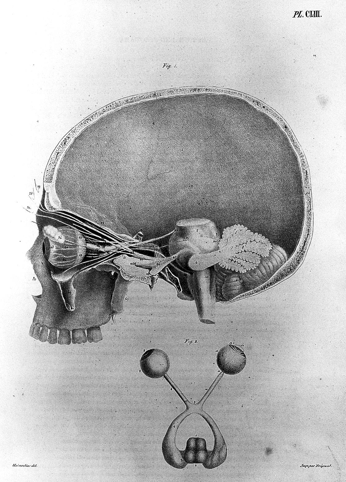 Anatomie De L Homme file:j. g. cloquet, anatomie de l'homme, 1821 - 1831 wellcome