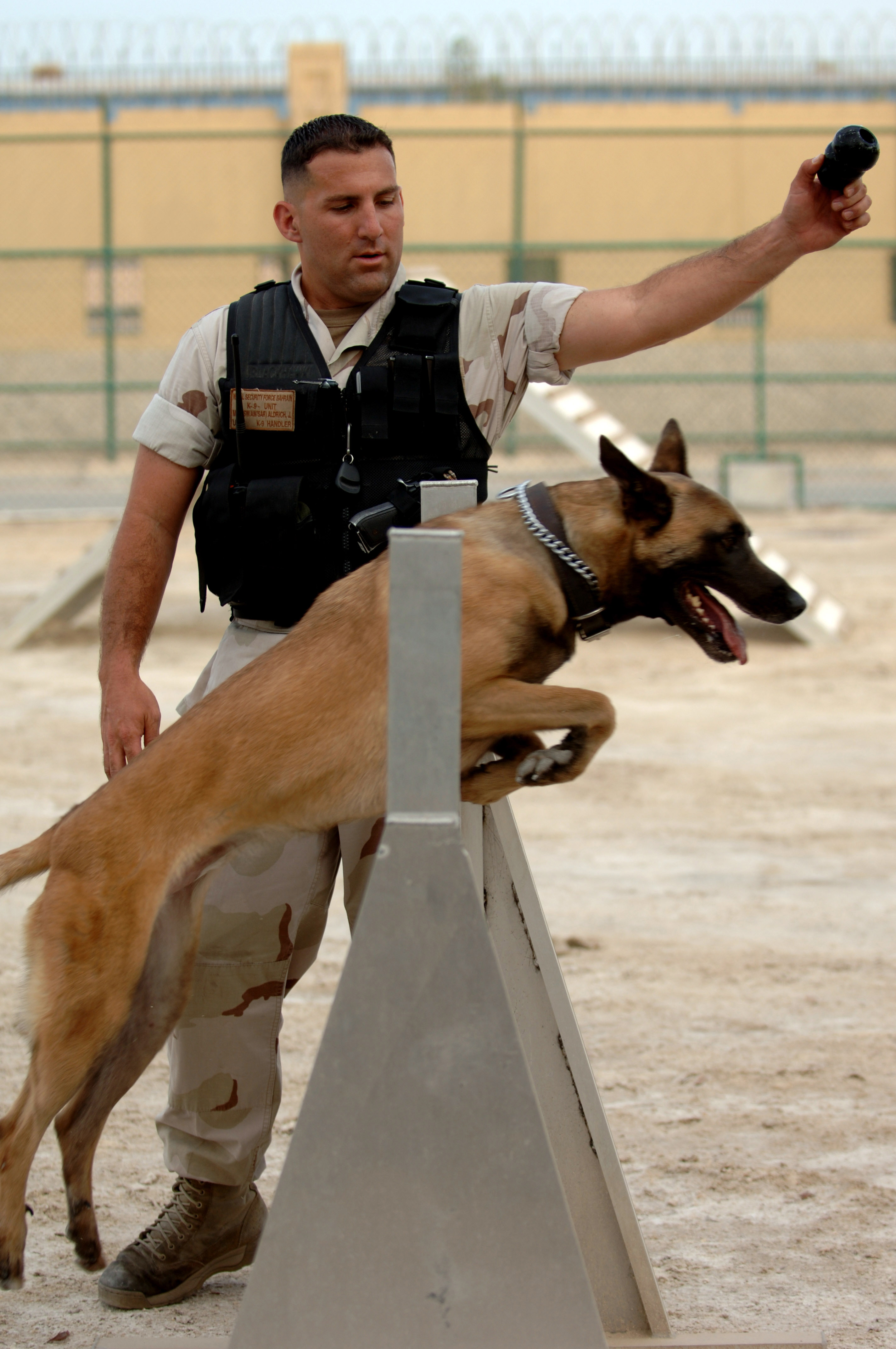 Image Result For Security Dog Training
