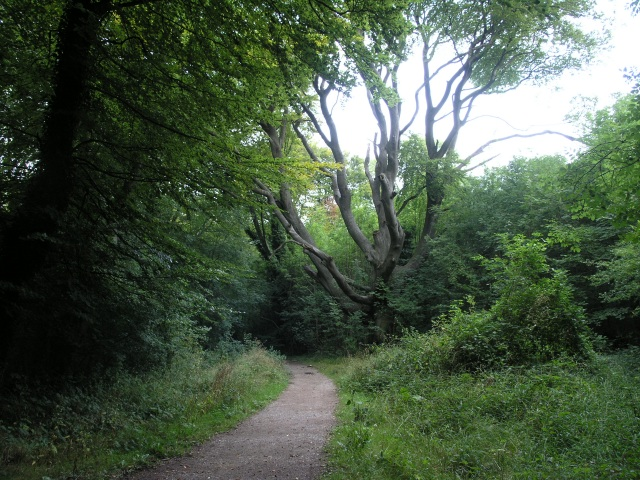 Marlesdon Park footpath - geograph.org.uk - 47442
