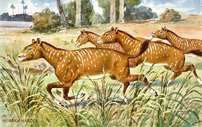 Predok koní mesohippus