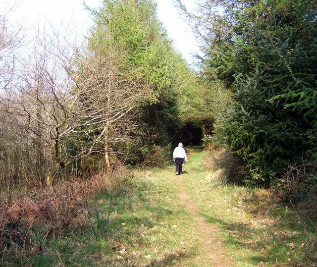 Mixed woodland at Llys-y-fran - geograph.org.uk - 399221