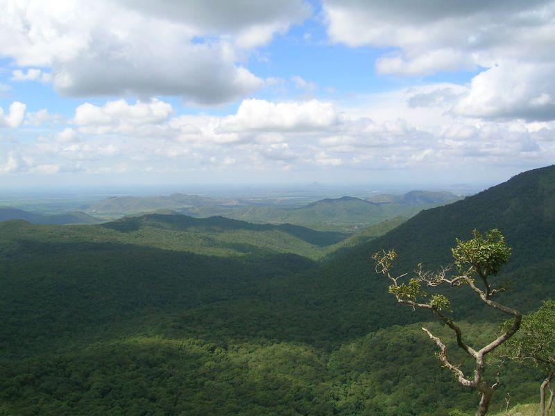 Mudumalai forest.jpg