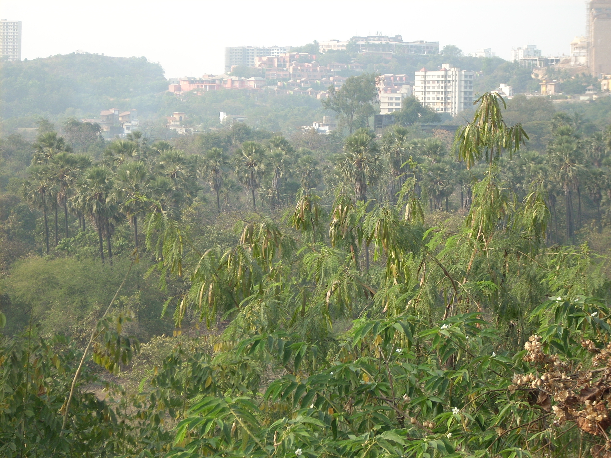 30 Excellent Garden Landscaping In Mumbai