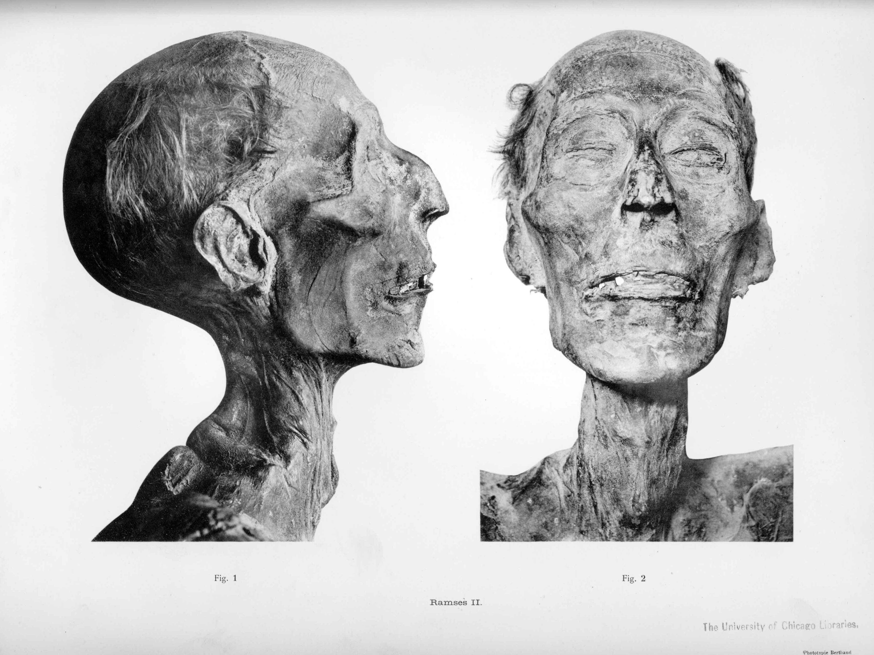 File:Mummy of Ramesses...