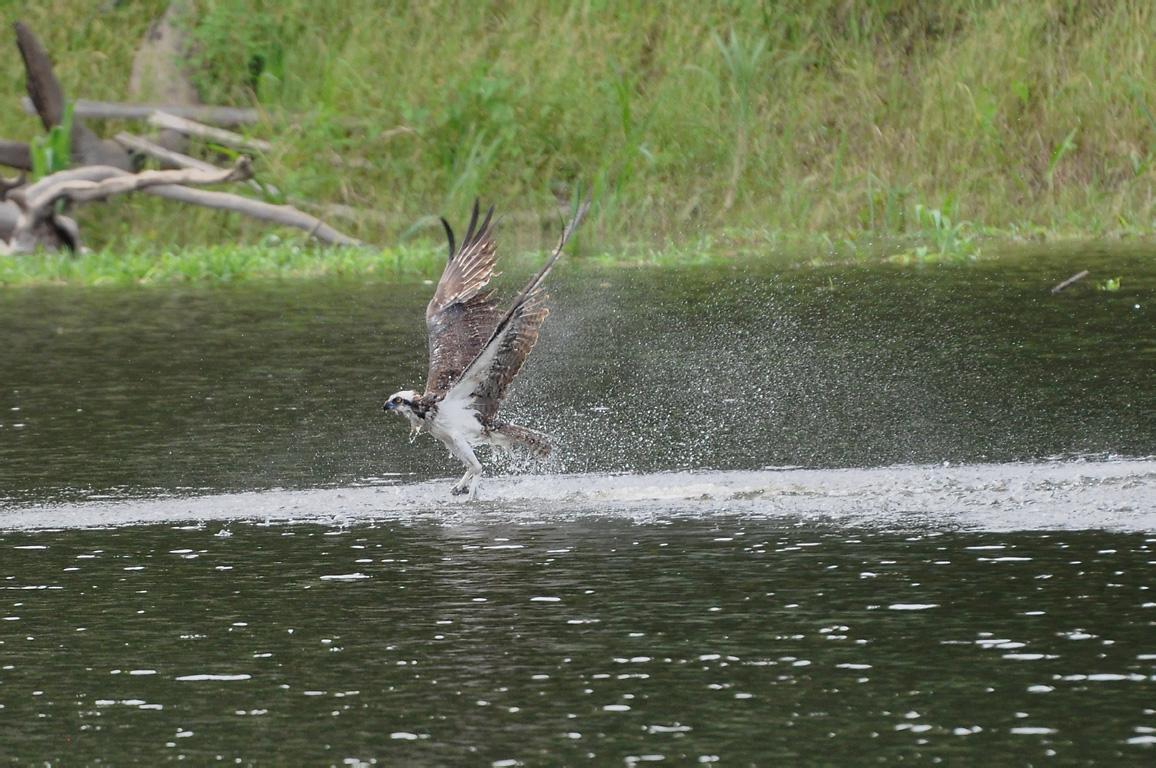 Uarini Amazonas fonte: upload.wikimedia.org