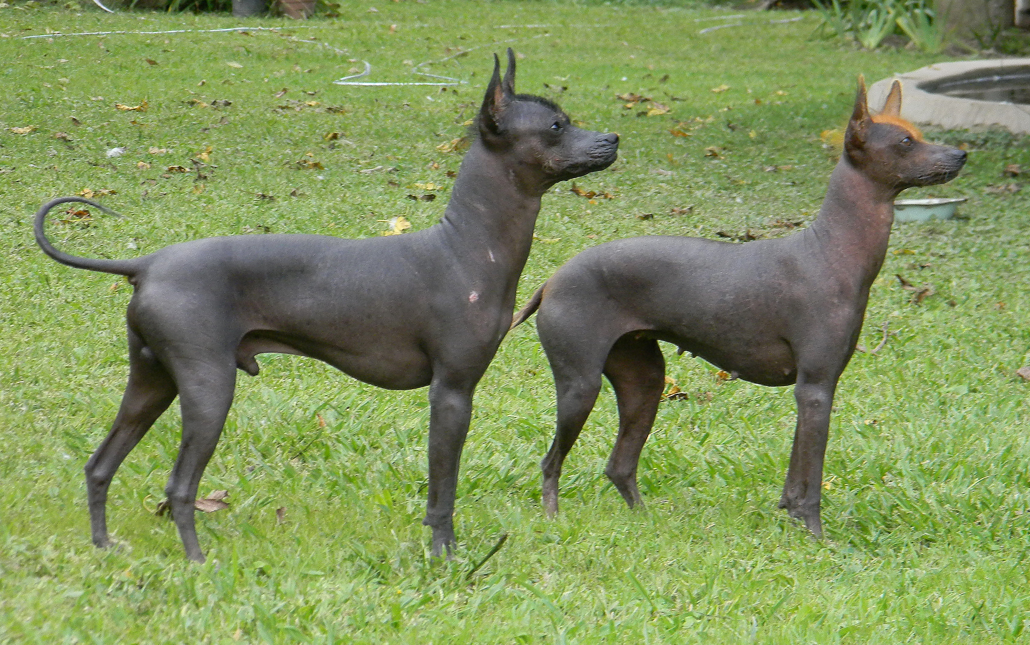 Dog Breeds Starting With B With Pictures