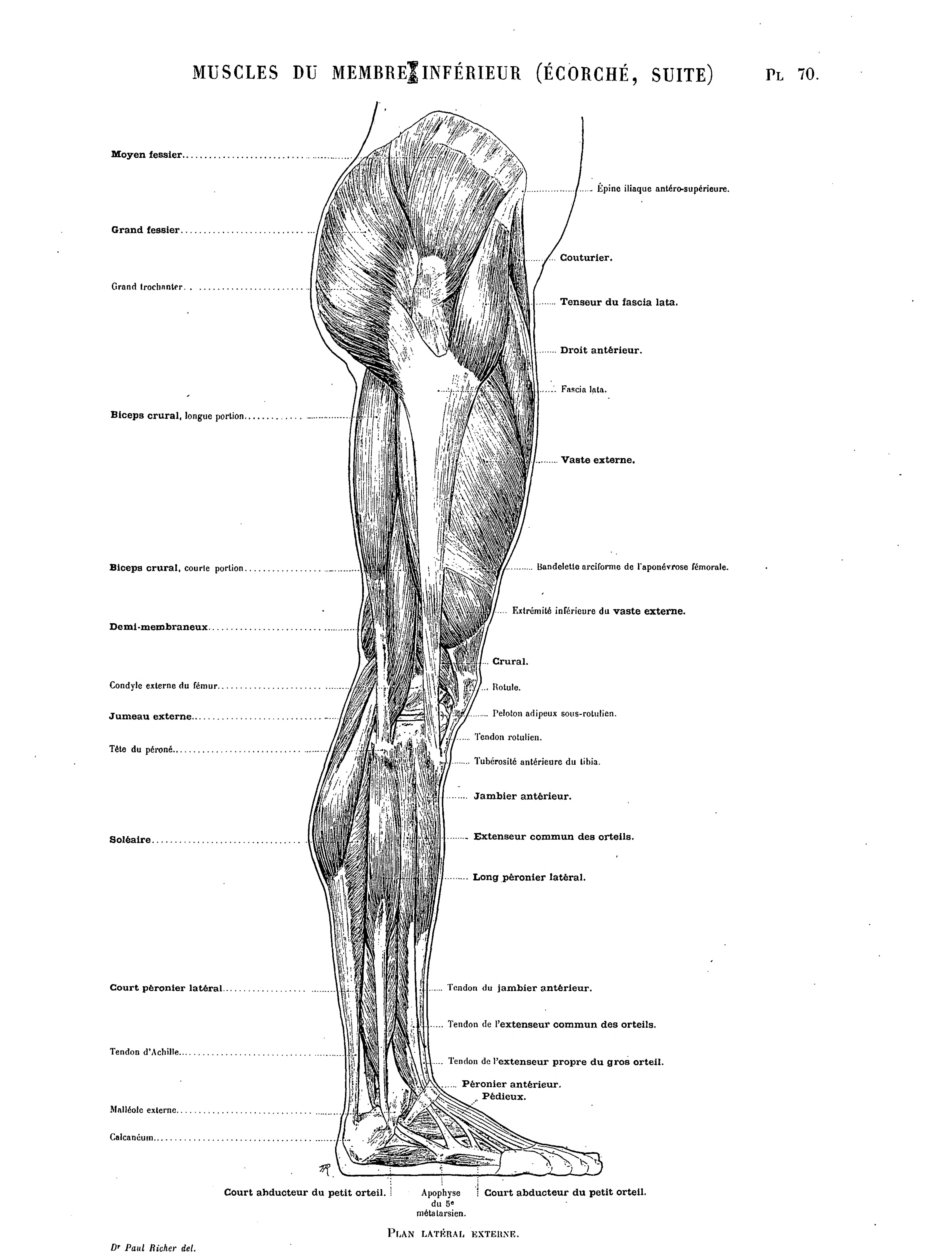Erfreut Körperbild Muskeln Fotos - Anatomie Ideen - finotti.info