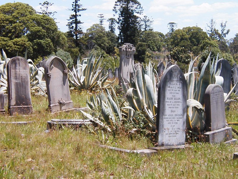 Overgrown Graves Shudder...