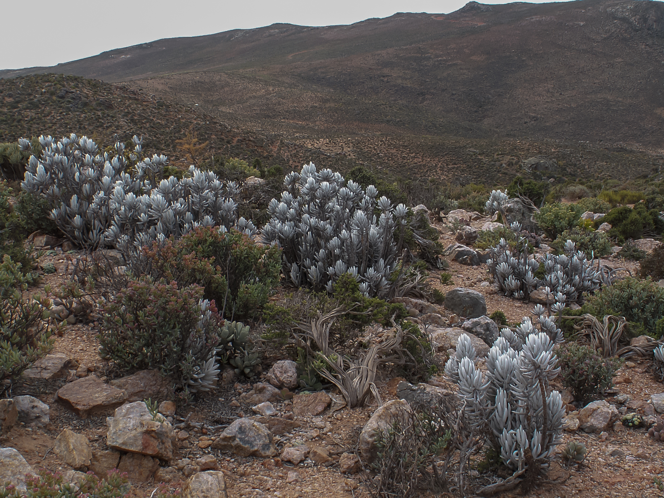 A terrestrial ecosystem in South Africa.