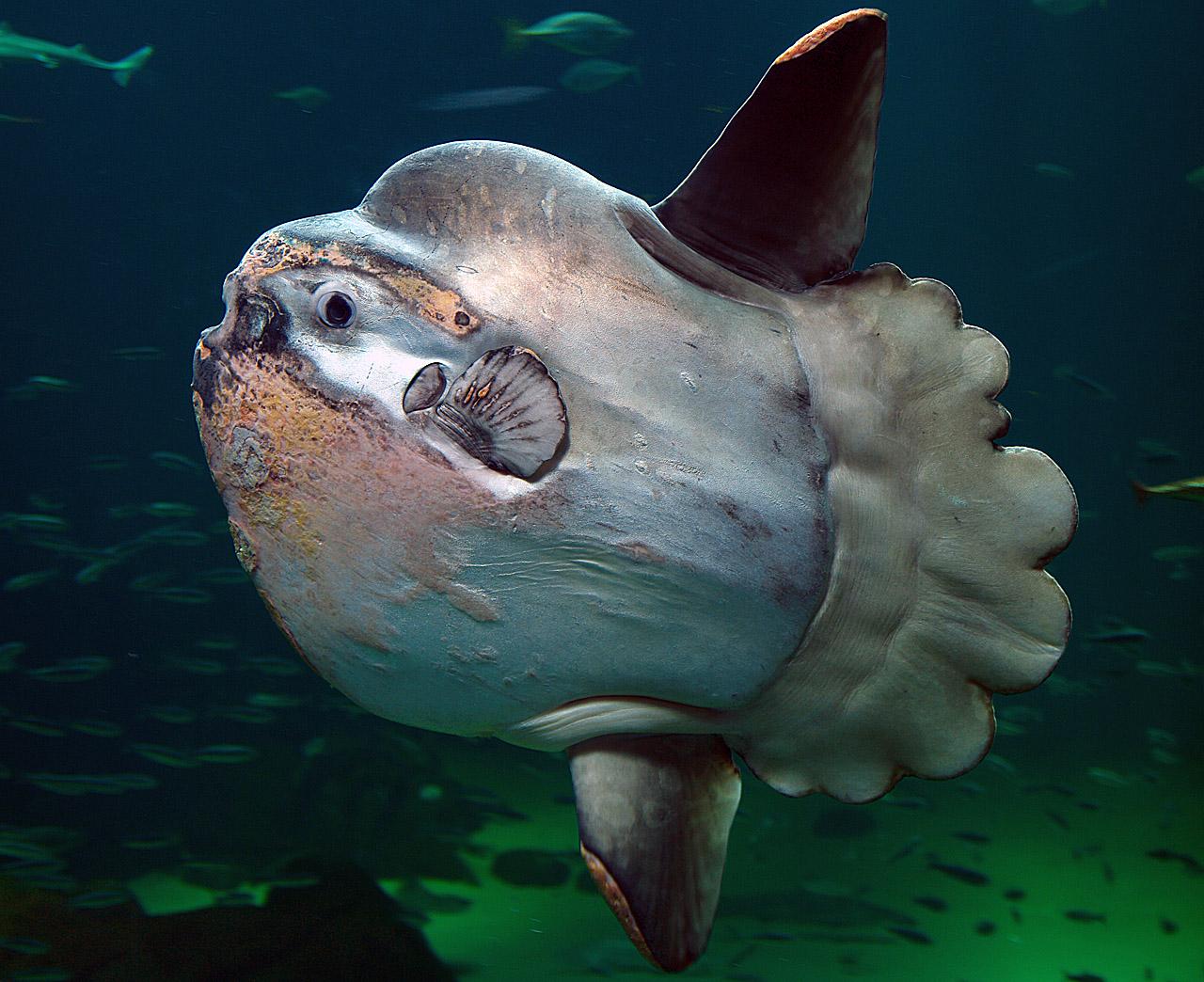 Jelly Blob In Fish Tank