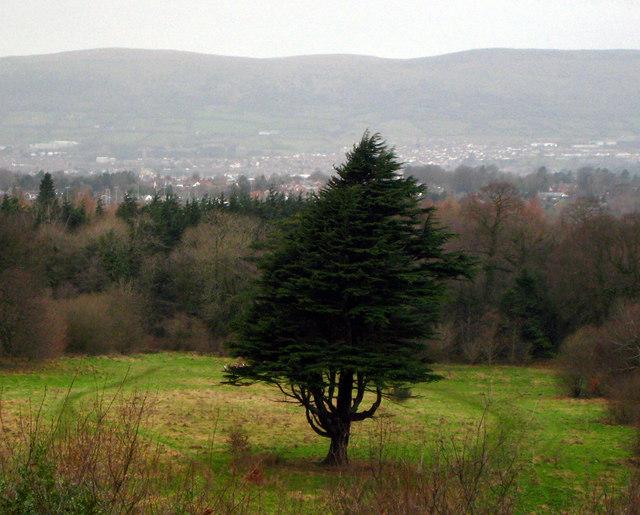 Tree, Belvoir - geograph.org.uk - 667205
