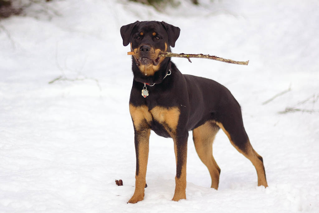 Image Result For Dog Training Charlotte