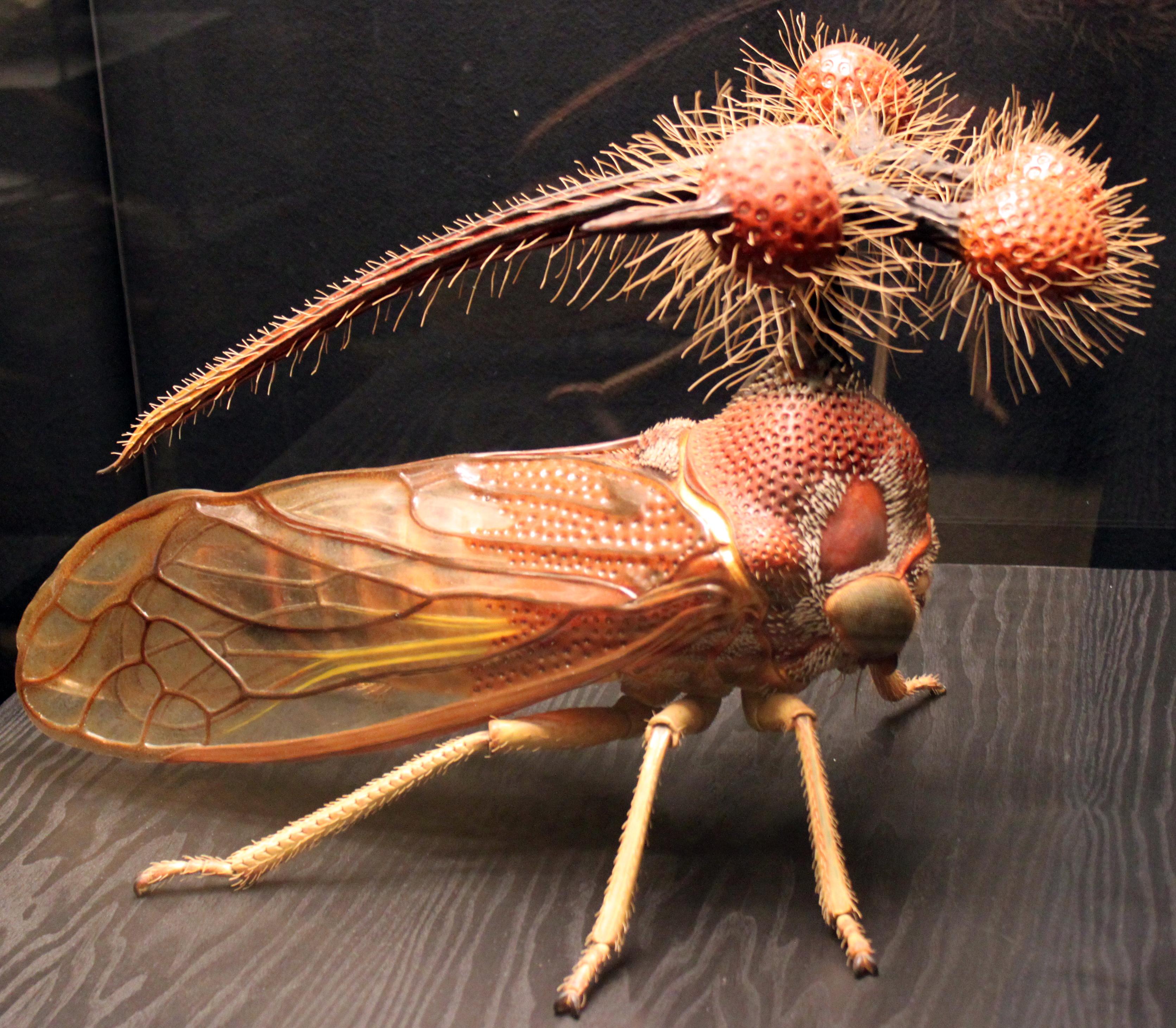Resultado de imagen de Brazilian Treehopper