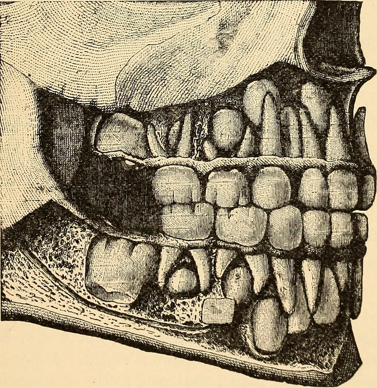 File:Anatomy, physiology and hygiene (1900) (14592651727).jpg ...